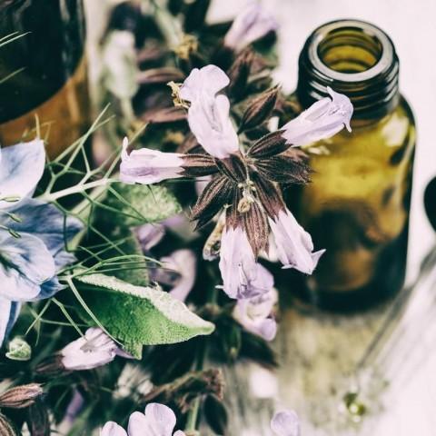 Améliorer la fertilité grâce aux plantes médicinales